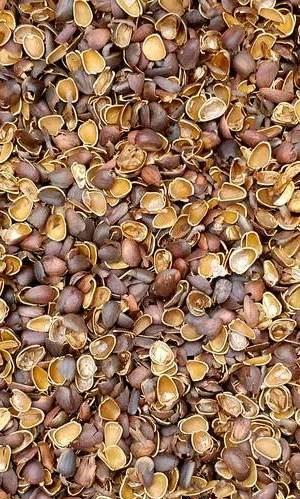 skorlupa sheluha mulcha kedrovogo oreha 300 na 600 e1590292825839 - Польза скорлупы кедрового ореха