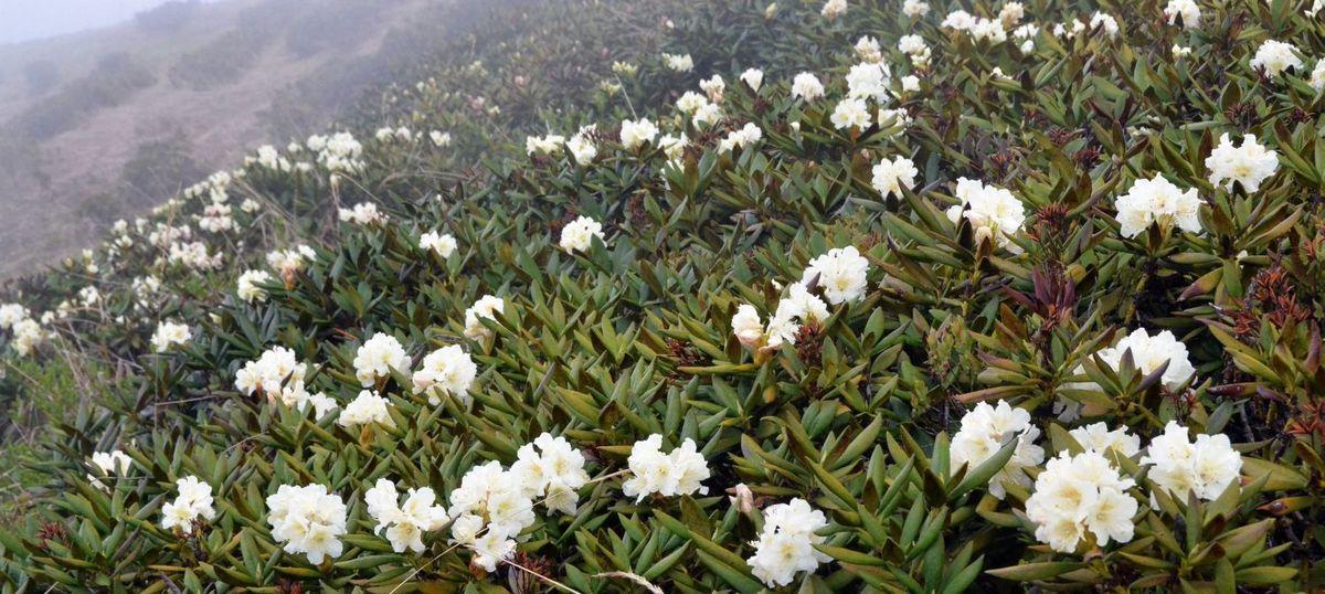 Sagan Daylya mesta sbora - Саган-Дайля — ароматная трава для чая