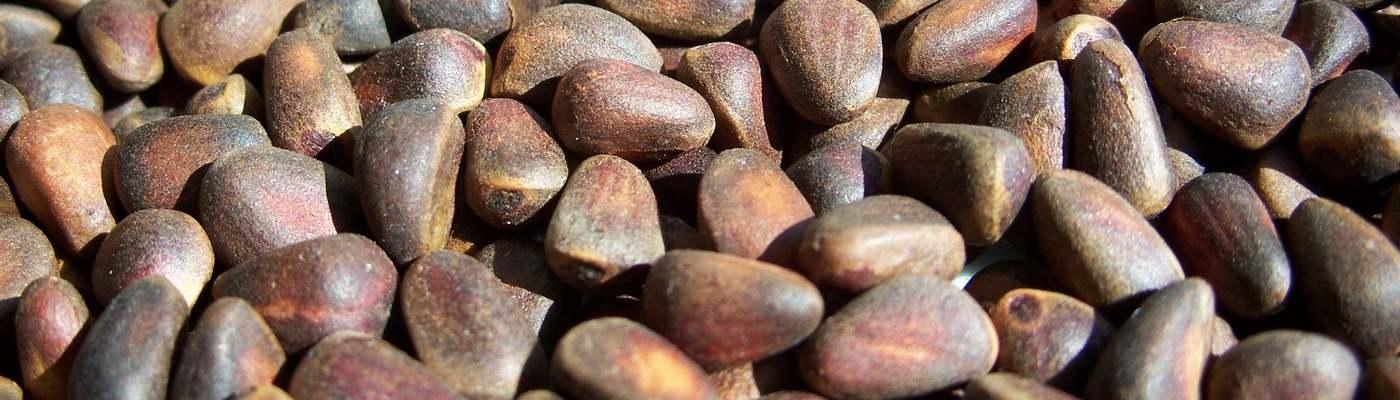 kedrovyj oreh - Кедровый орех: польза и вред